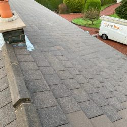 Local Roof Cleaning in Newcastleton